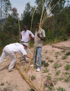 Barrieres anti-érosion en roseaux