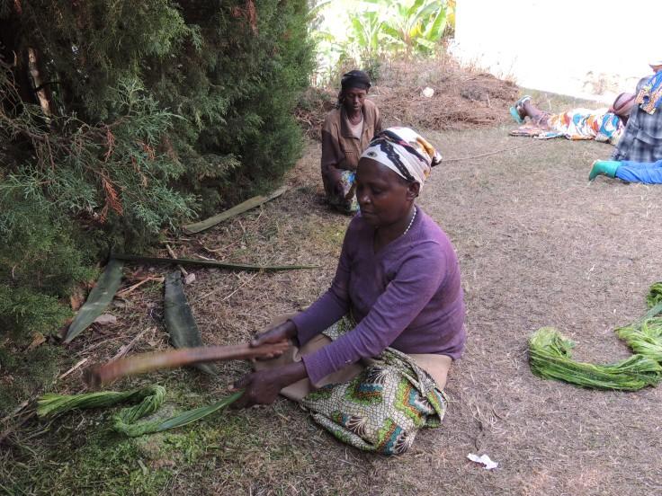 Deux femmes frappent les feuilles fraîchement coupées de sisal (agave sisalana) pour en extraire les fibres. Sur un tronc de bananier, deux autres raclent ces fibres pour en sortir une substance verte, afin qu'il ne reste que la fibre blanche, qui sera ensuite séchées au soleil.